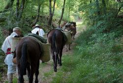 Les mules, marchant derrière les légionnaires romains